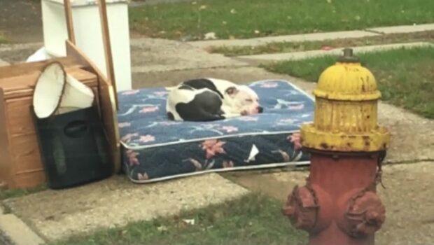 I en månad har Boo väntat utanför huset