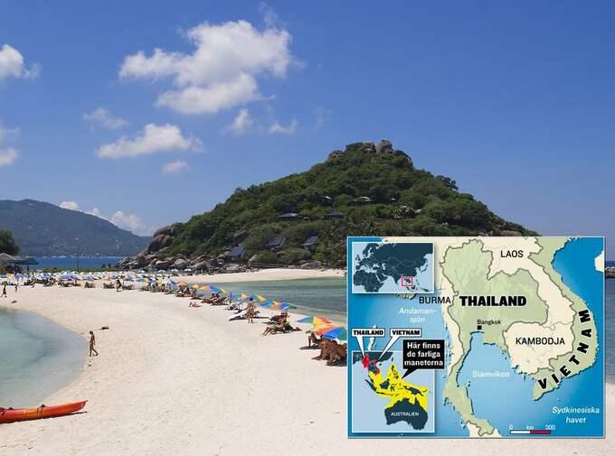 TRUBBEL I PARADISET. Den thailändska ön Koh Nang Yuan, nära Koh Tao, är en underbar plats med vackra stränder. Men i det kristallklara vattnet kan kubmaneterna lura. Foto: PANTHERMEDIA