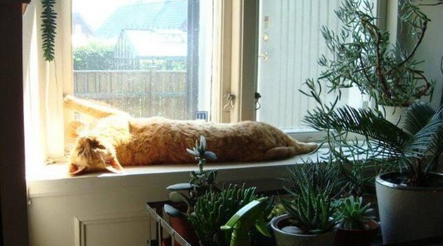 Katten Frans solar sig på fönsterbrädet. Till höger syns kottepalmen som ägaren nu kastat ut. Foto: Privat