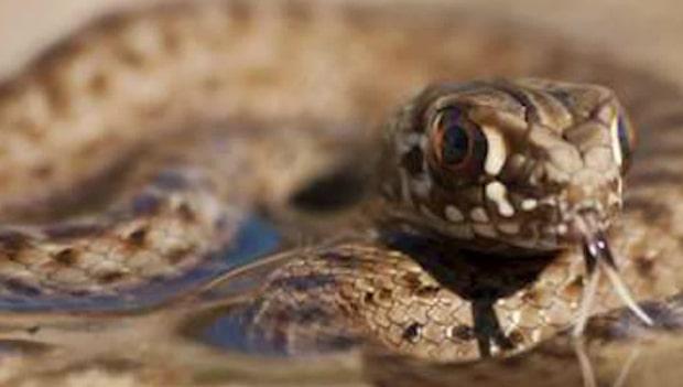 Hittade orm i köksvasken – flydde i panik
