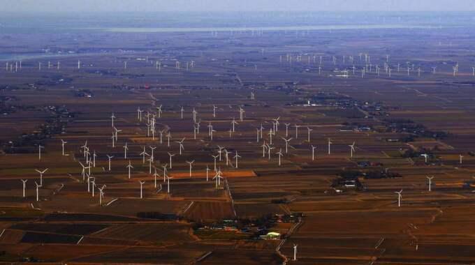 FELSATSNING? Tyskland har byggt väldiga vindkraftverksparker, som den här utanför staden Heide, men satsningen har kostat mer än vad den gett. Nu menar många att man bör satsa på forskning och teknikutveckling, och först därefter börja bygga stort. Foto: Joachim Musehold