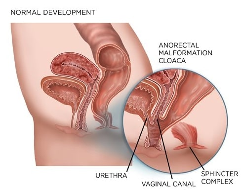 vagina efter fødslen rør com