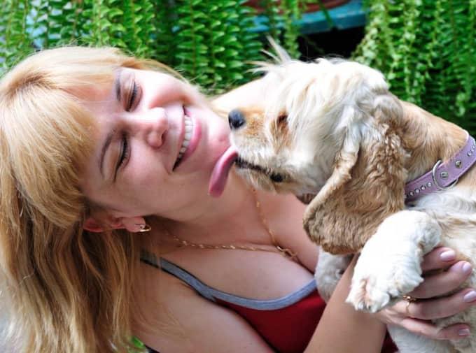 Puss på dig matte! Men vad vill hunden egentligen säga när den slickar dig runt munnen? Foto: Colourbox