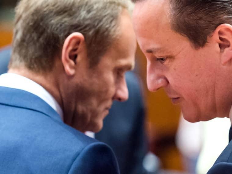 Donald Tusk och David Cameron samtalar. Bilden är tagen vid ett tidigare tillfälle. Foto: Geert Vanden Wijngaert