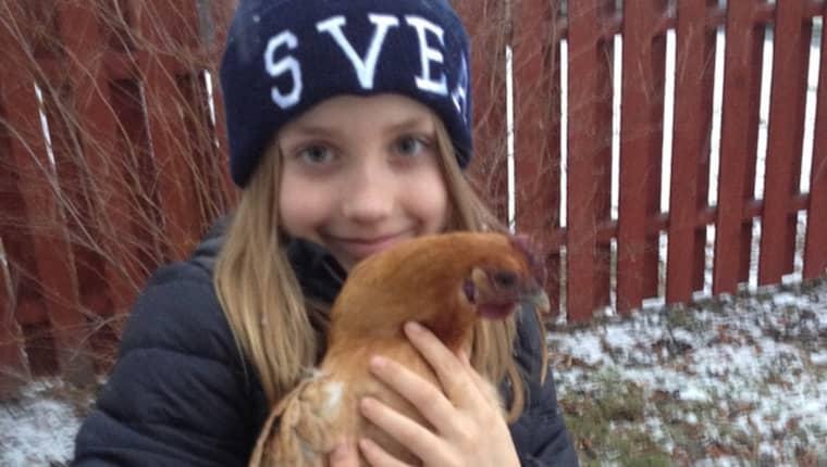 Hela familjen gläds åt de nya husdjuren. Här är dottern Sofia, 8, med en av hönorna. Foto: Privat