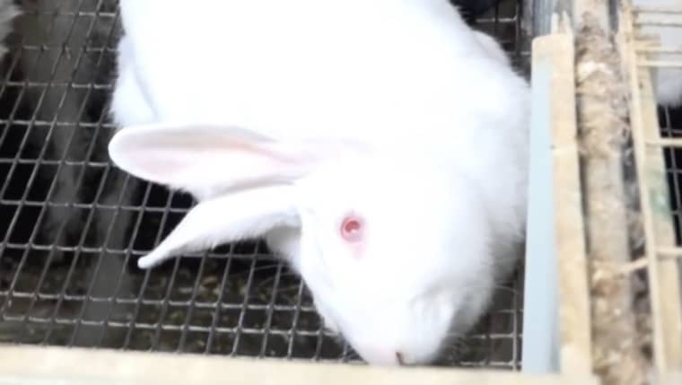 Det är djurskyddsorganisationen CIWF som har skrivit rapporten. Foto: CIWF