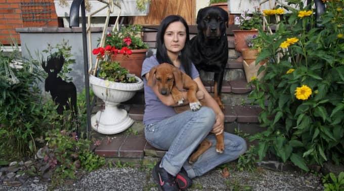 """Skyddade valpen. När Hatidza Camdzic kom hem hittade hon inte bara huset upp och nedvänt av inbrottstjuvar. Hon hittade även rottweilern Tyson, 4, svårt misshandlad och valpen Magic svårt skärrad. """"När Tyson inte kunde skydda hemmet har han i alla fall försökt skydda valpen"""", säger Hatidza Camdzic. Foto: Niklas Henrikczon"""