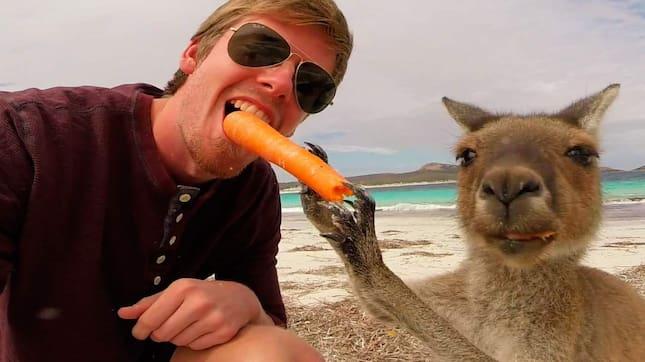 Dennis Karlsson och hans nya kompis – den morotsätande kängurun från Australien. Selfien är en stillbild från en så kallad GoPro-kamera. Foto: Dennis Karlsson / Fotoguru.se