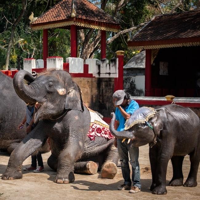 Dumbo och de andra elefanterna på Phuket Zoo tvingades dansa till ravemusik.