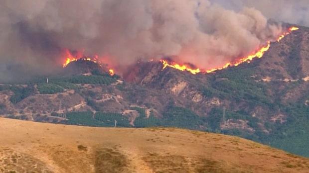 95 000 har evakuerat från bränderna i Kalifornien