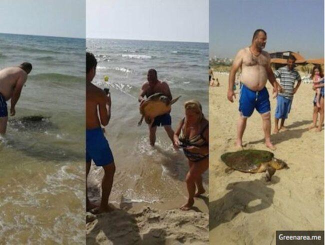 <span>Här släpar turisterna upp sköldpaddan på stranden.</span>