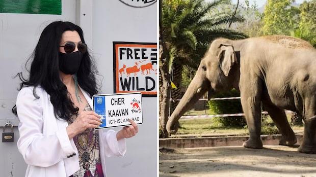 Världens ensammaste elefant har fått ett nytt hem
