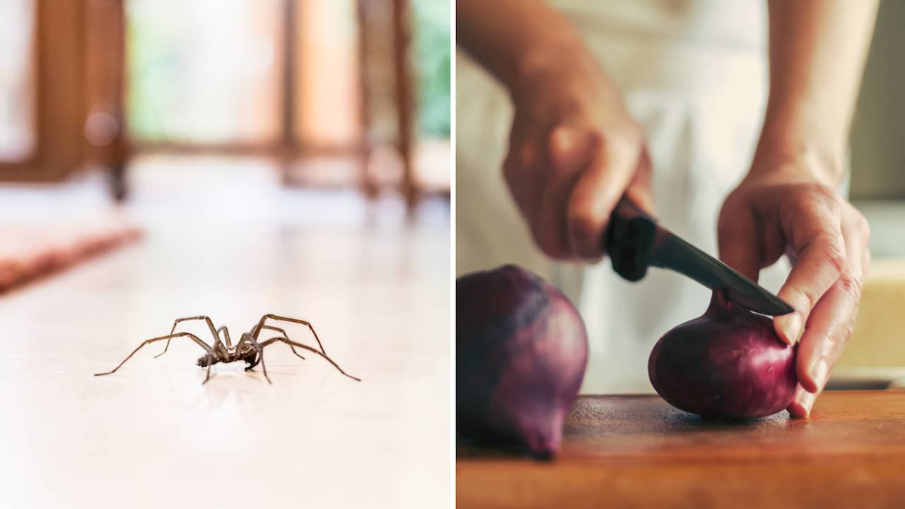 hur blir man av med spindlar inomhus