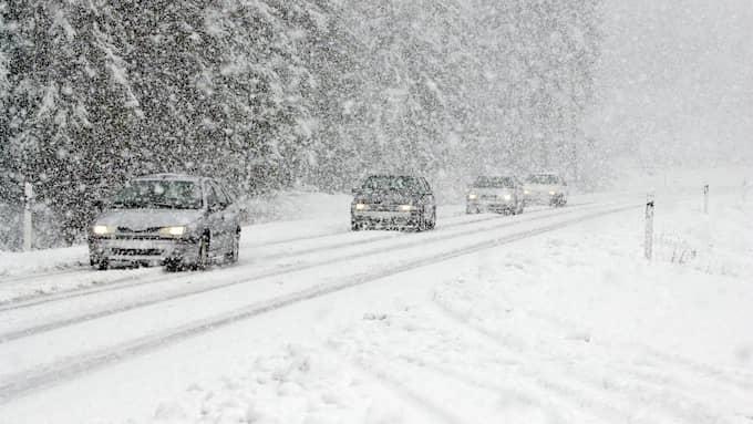 Mycket hårda vindar i kombination med ett kraftigt och blött snöfall väntas orsaka problem. Foto: LASSE SVENSSON