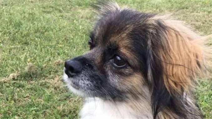 Hunden Casper försvann i tisdags, och är fortfarande försvunnen. Foto: PRIVAT