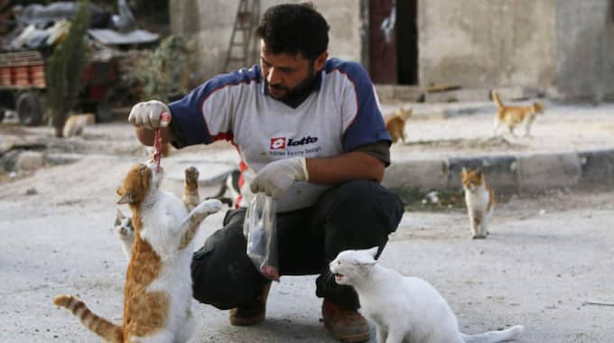 alaa, an ambulance driver, feeds cats in masaken hanano in aleppo, september 24, 2014. alaa buys about $4 of meat everyday to feed about 150 abandoned cats in masaken hanano, a neigbourhood in aleppo that has been abandoned because of shelling from forces loyal to syria's president bashar al-assad on it. alaa said that he has been feeding and taking care of the cats for over 2 months. reuters/hosam katan (syria - tags: politics civil unrest conflict animals) Foto: Hosam Katan