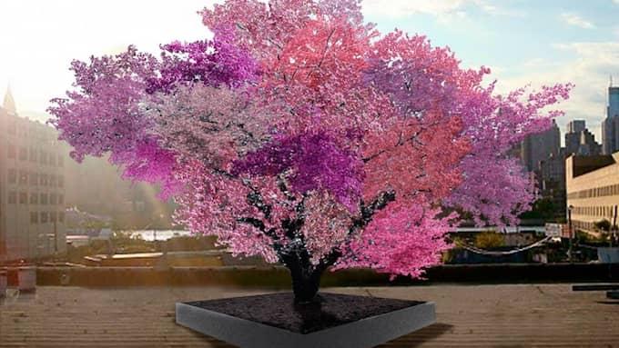 """TRÄDSKULPTUR. """"Tree of 40 fruit"""" ska ympas till att bära 40 olika sorters stenfrukter. Foto: Sam Van Aken"""
