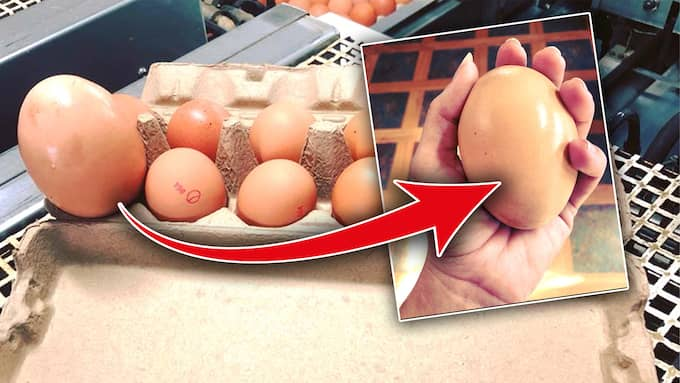 Scott Stockman hittade ett gigantiskt ägg. Foto: Facebook