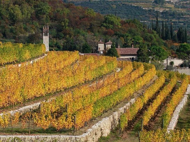 Nu vill Allegrini öppna vinvärlden för en yngre generation. En del av den nya strategin är att bjuda in unga till den villan Villa della Torre för att uppleva vinkulturen och få en inblick i vinets värld.