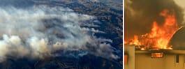 Fem döda efter svåra skogsbränder i USA