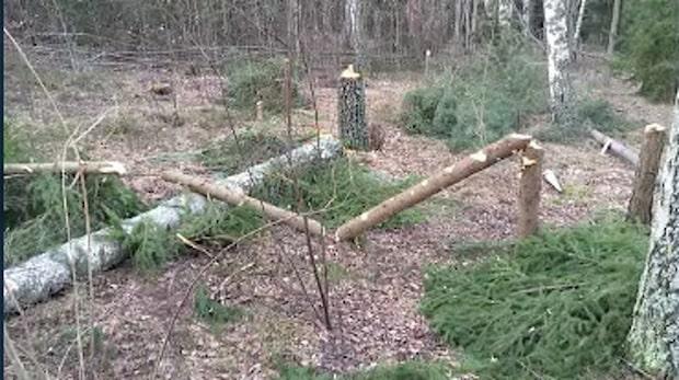 Stort område med fällda träd gäckar polisen