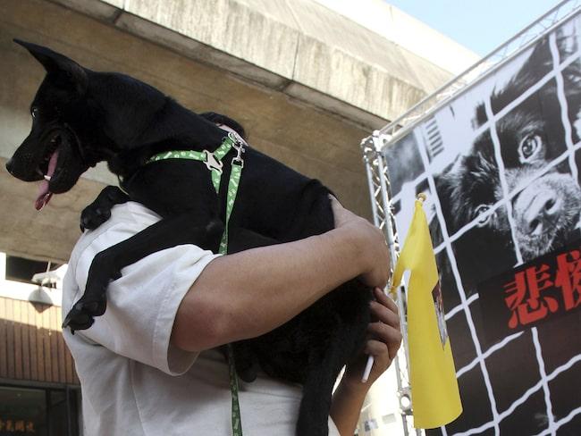 Men från och med nu blir det förbjudet att äta kött av hund och katt i Taiwan. Den som ertappas kan få böter upp till motsvarande 75 000 kronor.