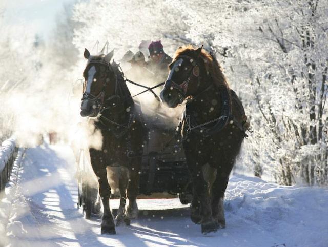 Bildresultat för tolkning efter häst på skidor alperna