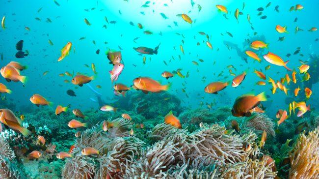 Den som vill surga kan njuta av rev med hajar, mantor, sköldpaddor och mängder av färgglada fiskar.