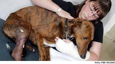 Skadad. Shadow och Camilla Moretto blev attackerade av en rasande kamphund. Nu har förundersökningen lagts ner.