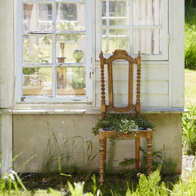Plättar i luften planterade i ett zinkfat har fått ersätta sitsen i den avlutade stolen. 500 kronor för hela arrangemanget, Växtmiljö.
