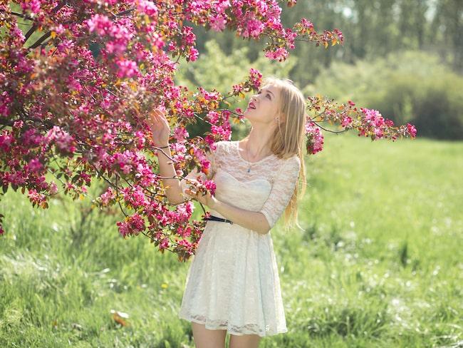 Körsbärsträdens blommor är fantastiska.