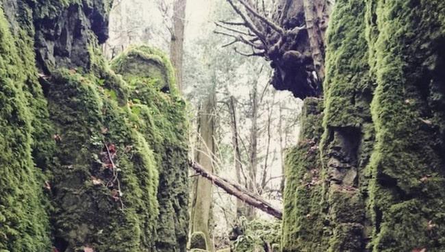 <span>Skogen Puzzelwood hyser några av filmseriens figurer.</span>