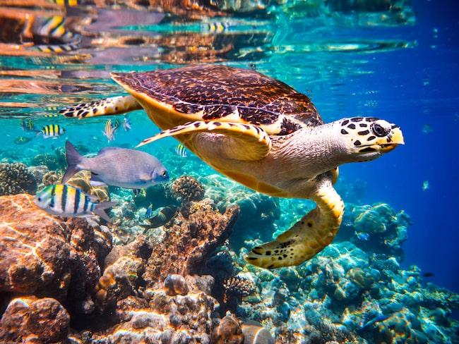 Njut av det fantastiska djurlivet i Indiska oceanen.