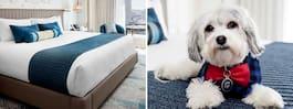 Speciella hotellet – med  hundar på room service
