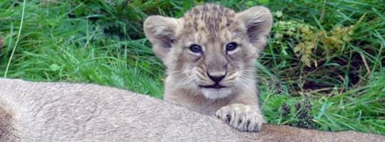 lejonnamn