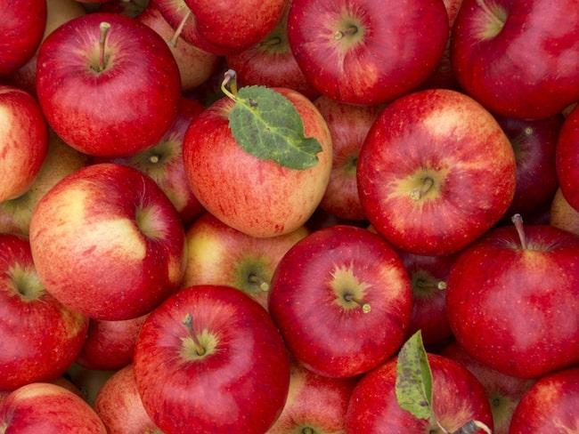 """""""I dag köper vi äpplen från såväl Norrland som Skåne och Småland men planen är att premiumprodukterna ska vara helt självförsörjande"""" säger Andreas Sundgren, Brännlands grundare och vd."""