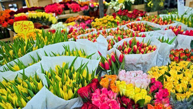 Åker du till Amsterdam på våren kan du njuta av den färgsprakande blomstermarknaden.