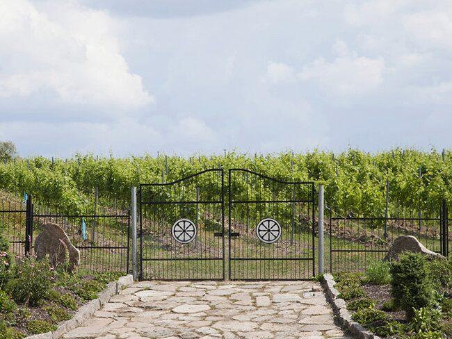 Ästad Vingård vingård i Halland.