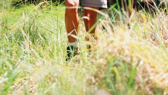 Fästingar trivs i högt gräs.