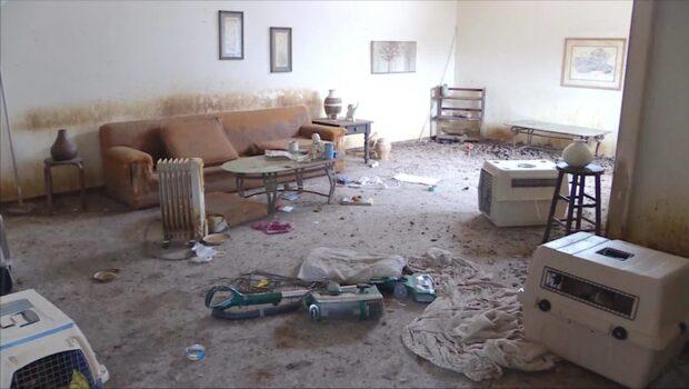 Stanken var fruktansvärd - över 40 katter räddades