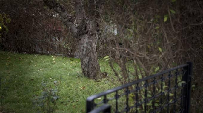 Här i Forsbergs trädgård i Enskede grävde han ned de hemliga utskrifterna. Sen dess har ingen sett dem. Foto: Tommy Pedersen