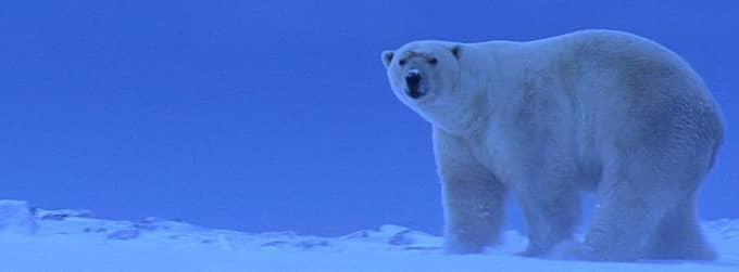 Reducerat snötäcke och kortare vinter. Förändringarna sker snabbt i Arktis. Foto: Tom Arnblom