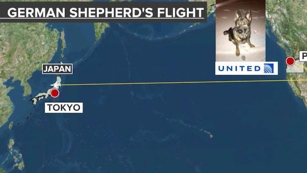 Flygbolagets miss - skickade hund till Tokyo i stället för Kansas