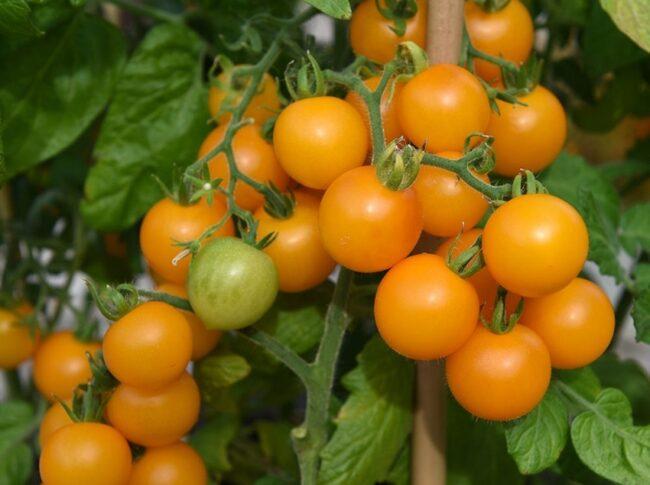 Årets nyheter innehåller mycket ätbart och ekologiskt...