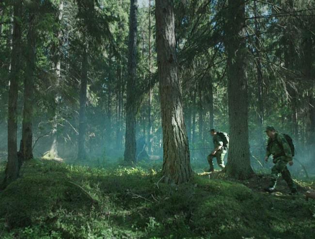 """Jordskott"""" är en kamp mellan människan och naturen. Boven i detta dramat tycks vara människorna som vill skogen illa."""