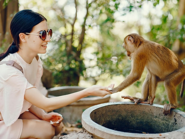 Helt fel beteende: rör inte aporna på Monkey Hill!