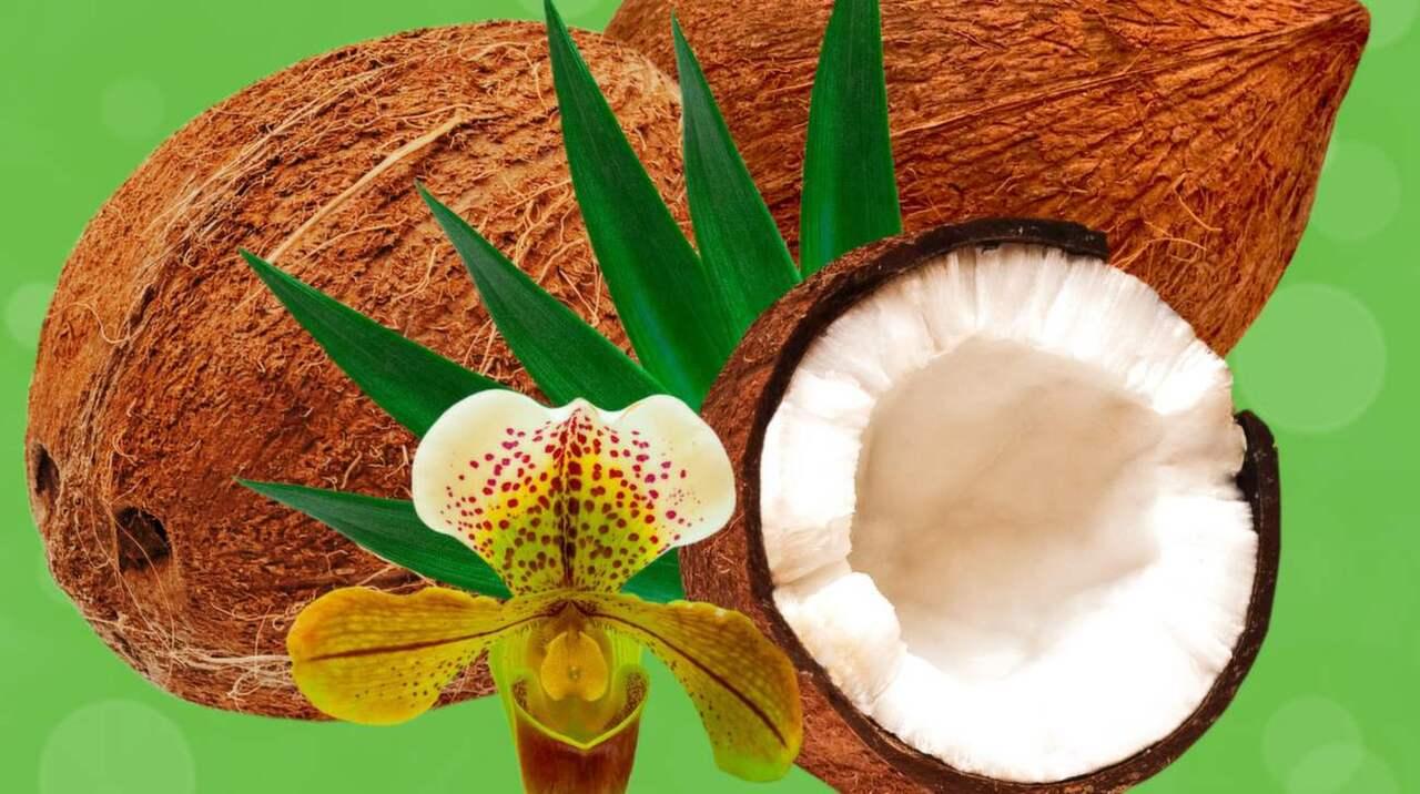 Steka i kokosfett