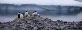 Allt snabbare avsmältning i Antarktis