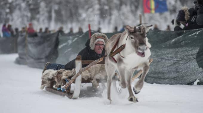 """""""Det var jätteroligt, men jag tror inte att jag ställer upp igen"""", säger Australiens Sverigeambassadör Gerald Thomson, som vann renracet i Jokkmokk. Foto: Erland Segerstedt/TT"""