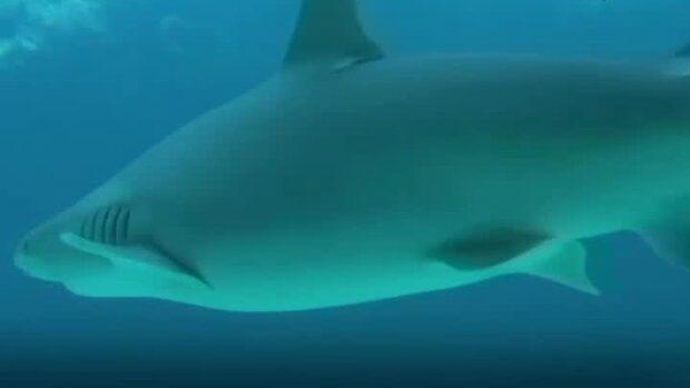 500 000 hajar kan dö av coronavaccin